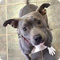 Adopt A Pet :: Jeannie - Dayton, OH