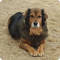 Adopt A Pet :: Ponte - Evergreen, CO
