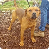 Adopt A Pet :: Dusty - Yreka, CA