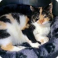Adopt A Pet :: Carmen - Lunenburg, MA