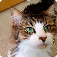 Adopt A Pet :: Mariska - Salisbury, MA