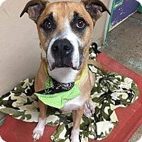 Adopt A Pet :: Jasper - Pottsville, PA