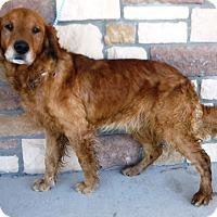 Adopt A Pet :: Clyde - Artesia, NM