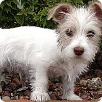 Adopt A Pet :: Apple - Gilbert, AZ