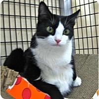 Adopt A Pet :: Topaz - Deerfield Beach, FL
