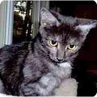 Adopt A Pet :: Sadie - Arlington, VA