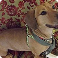 Adopt A Pet :: Scooter - Princeton, KY