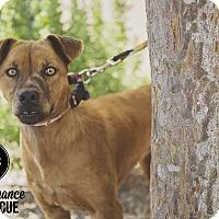 Adopt A Pet :: Tina - Las Vegas, NV