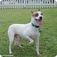 Adopt A Pet :: Braxton - Homewood, AL