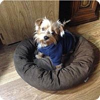 Adopt A Pet :: Leia - Fremont, CA