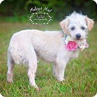 Adopt A Pet :: Wiri - Fort Valley, GA