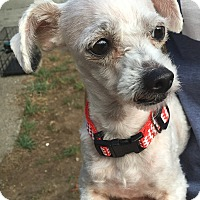 Adopt A Pet :: Jazzie - Tumwater, WA