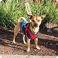 Adopt A Pet :: Cruiser - Yuba City, CA