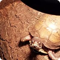 Adopt A Pet :: Turk - Aurora, IL