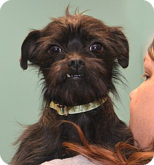 Terrier (Unknown Type, Small) Mix Dog for adoption in Rockford, Illinois - Lilah Jean