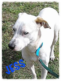 Labrador Retriever Mix Dog for adoption in Tempe, Arizona - Jess