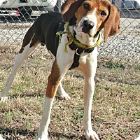 Adopt A Pet :: Walter - Somerset, KY