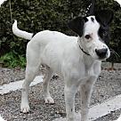 Adopt A Pet :: Max-pending!!