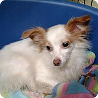 Adopt A Pet :: Kasey - Oak Ridge, NJ