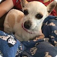 Adopt A Pet :: Princess Buttercup - Orange, CA