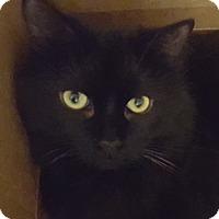 Adopt A Pet :: Dobby - Toronto, ON