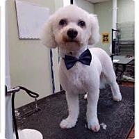 Adopt A Pet :: Landon - Valley Park, MO