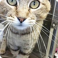 Adopt A Pet :: BIG MOMMA - Cleveland, MS
