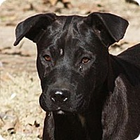 Adopt A Pet :: Heidi - Marion, AR