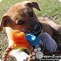 Adopt A Pet :: Kirby - Dallas, TX