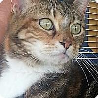 Adopt A Pet :: Savannah - Pasadena, CA