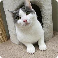 Adopt A Pet :: Spaghetti - Gilbert, AZ