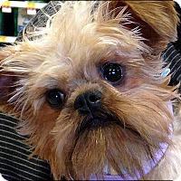 Adopt A Pet :: HIGGINS - ADOPTION PENDING - Seymour, MO