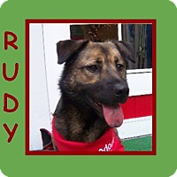 Adopt A Pet :: RUDY - Dallas, NC