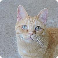 Adopt A Pet :: Jerry - MARENGO, IL