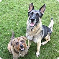 Adopt A Pet :: Atlas (Guest) - Roswell, GA