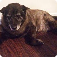 Adopt A Pet :: Rascal 2 - Savannah, GA