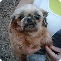 Adopt A Pet :: lilly - Crump, TN