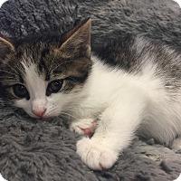 Adopt A Pet :: Clove - River Edge, NJ