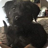 Adopt A Pet :: Bumblebee - Bradenton, FL