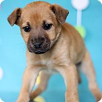 Adopt A Pet :: Michelangelo - Waldorf, MD