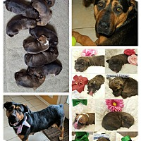 Adopt A Pet :: Gwendolyn's Boys - Minot, ND