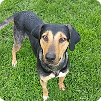 Adopt A Pet :: K19 - Indianola, IA