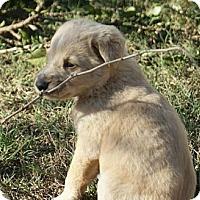 Adopt A Pet :: REMI - Torrance, CA