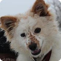 Adopt A Pet :: Freckles - Minnetonka, MN