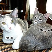 Adopt A Pet :: Margaret - Portland, OR