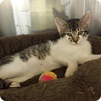 Adopt A Pet :: Mickey - Lawrenceville, GA