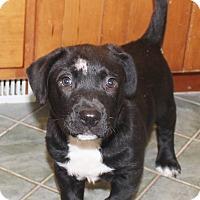 Adopt A Pet :: Spud - Chapel Hill, NC