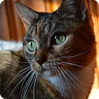 Adopt A Pet :: Brittany/Eleanor - Staten Island, NY