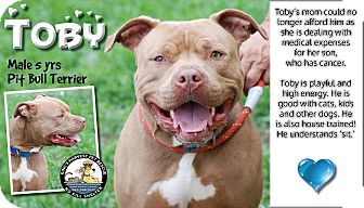 American Pit Bull Terrier Mix Dog for adoption in Davenport, Iowa - Toby