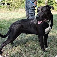 Adopt A Pet :: Gordon - Washington, GA